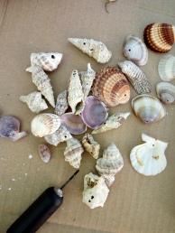 shell mobile 1